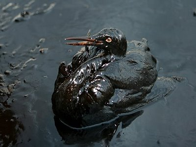oil-spill-animals-bird-5