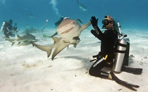 SharkHighFive