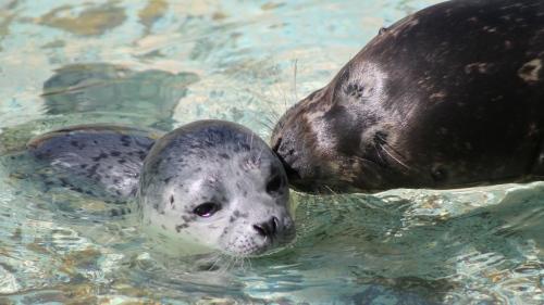 04-23-2014-otter-kiss