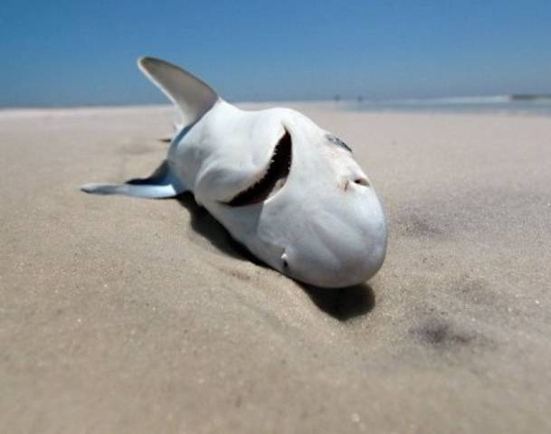 Loan Shark San Jose